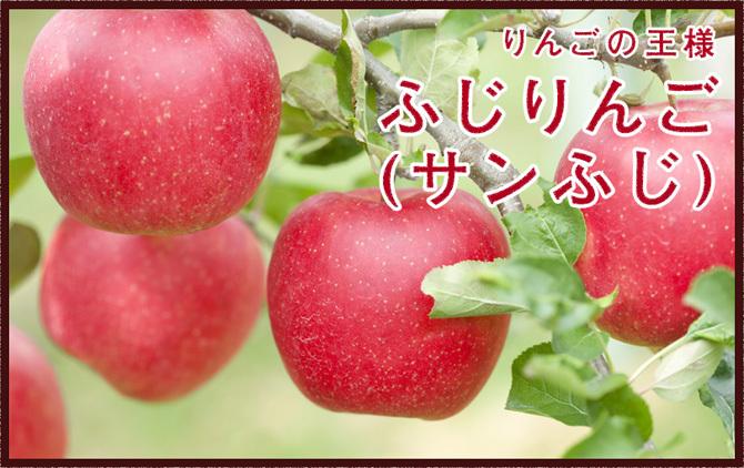 山形県産ふじりんご販売開始