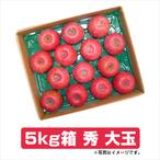 ふじりんご 5kg箱 秀 大玉